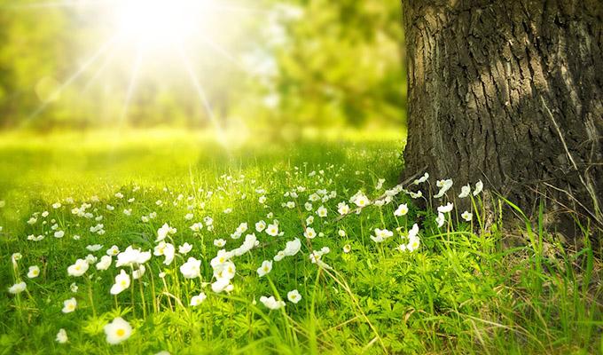 春、新しいことを始めたい