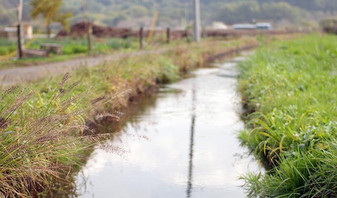 茨城の田舎でザリガニ釣り