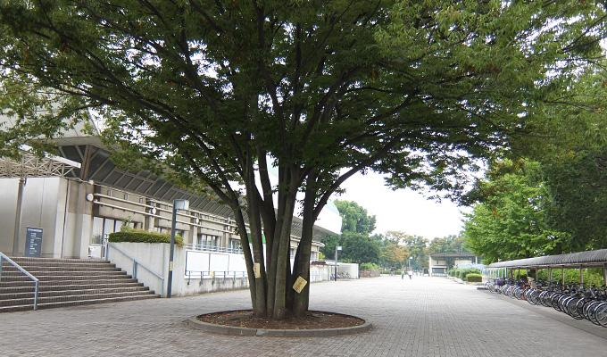 府中市・郷土の森公園