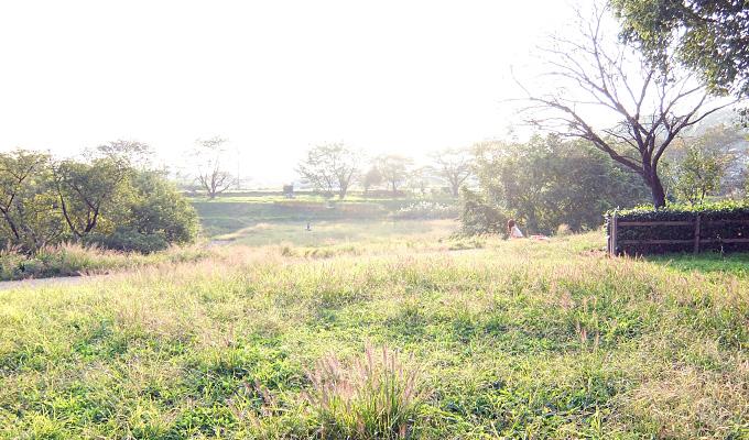 清瀬市・金山緑地公園で秋の光に包まれて遊ぶ